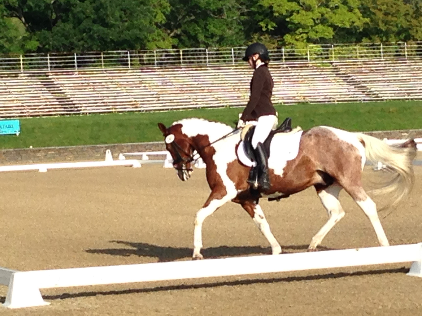 paint trot on cirlce